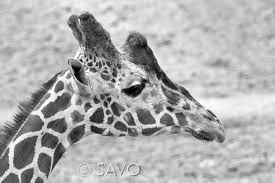 Afbeeldingsresultaat voor fotografie natuur zwart wit