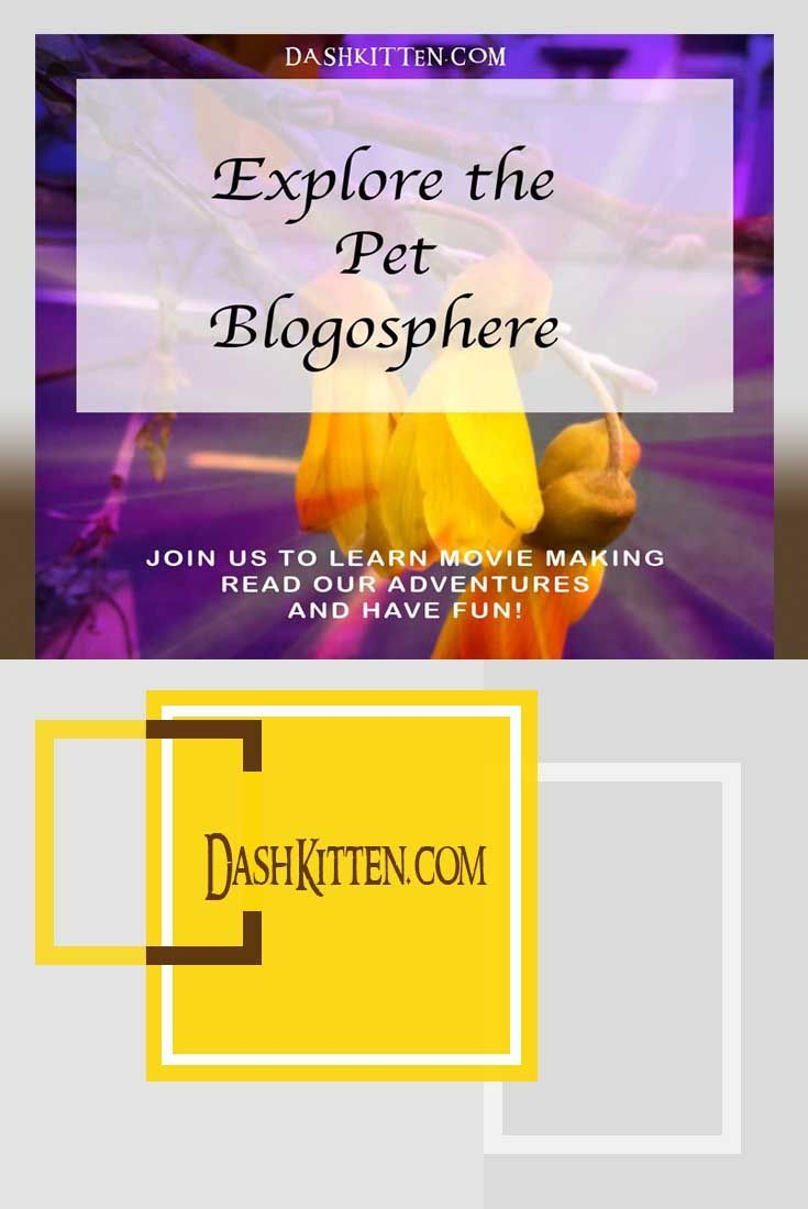 Meet worldwide blogging friends in the kitty blogosphere, learn to make your own pet movies, learn to spoil your cat and grab the latest kitty news! (scheduled via http://www.tailwindapp.com?utm_source=pinterest&utm_medium=twpin)