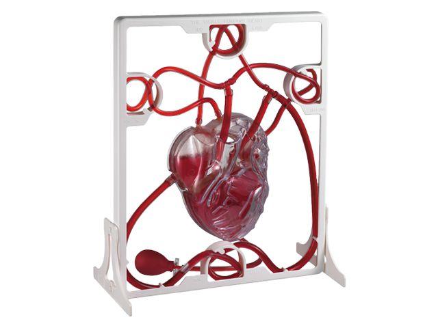Modelo Bombeo del corazón. Ref 8-35118