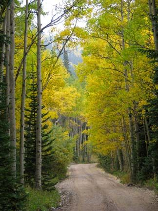 Best Hikes for Viewing Aspens Near Denver Colorado | Day Hikes Near Denver - Explore The Best Hiking in Colorado