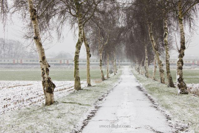 Photography - Fotografie - Never stop wondering - Sweet flight - Sneeuw - Snow - Natuur - Zedelgem - Boom
