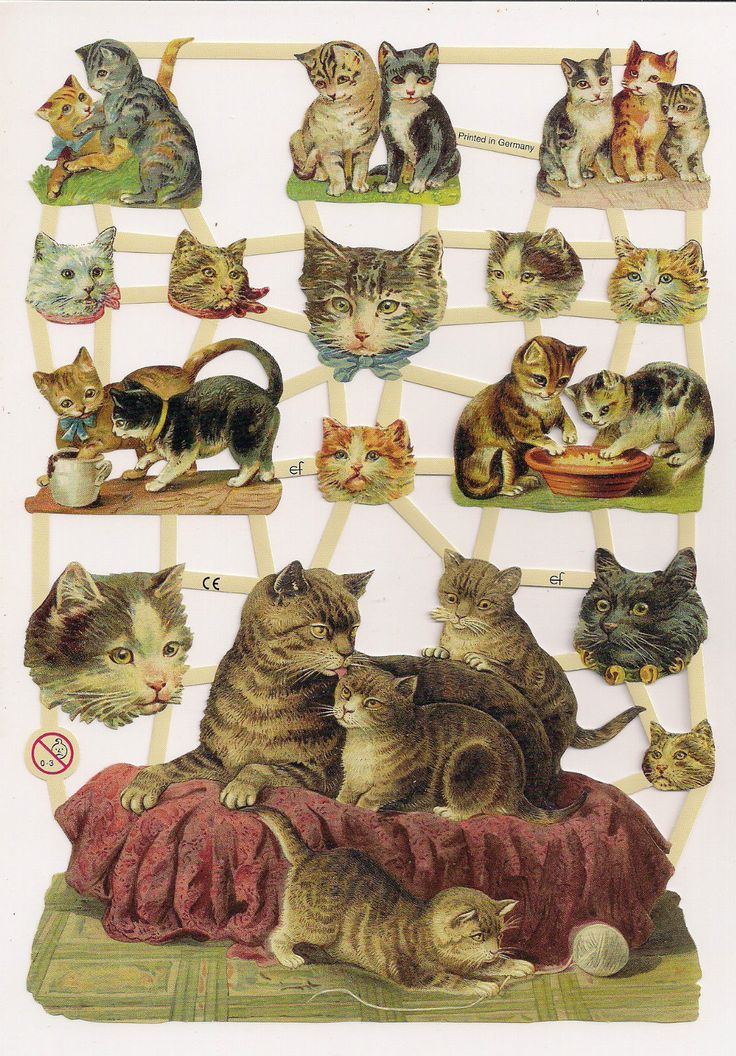 German Victorian Style Embossed Scrap Die Cut Momma Cat Bathing Kittens EF7301