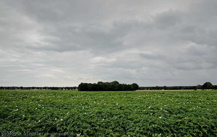 Aardappelveld in Drenthe