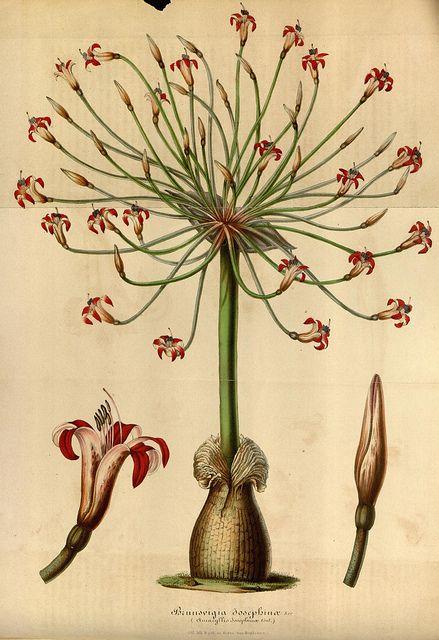 Flore des serres et des jardins de l'Europe. A Gand :chez Louis van Houtte, eÌditeur,1845-1880..