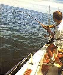 Pesca de Mar en Península Valdés - Rawson - Playa Unión - Provincia del Chubut