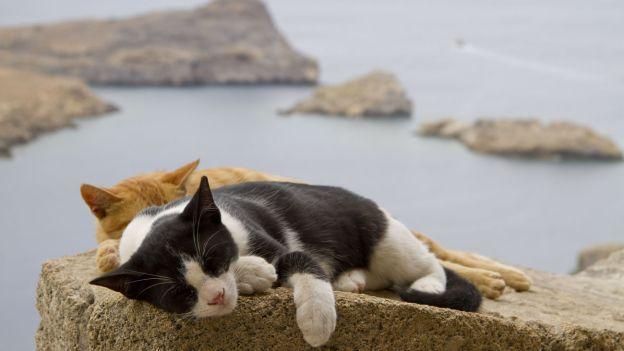 Gatti & Cani di Casa: Un'isola felice per i felini...