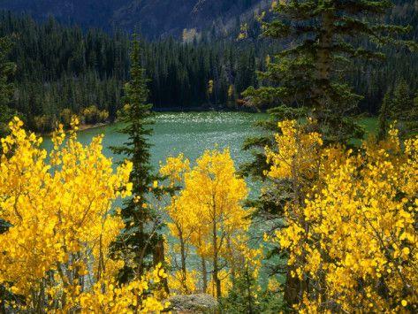 'Aspen above Pear Lake in Autumn, Boulder Mountain, Dixie ...