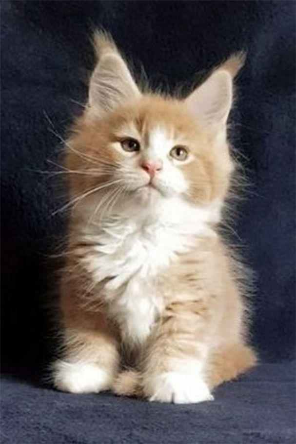 Pin En Cute Animals
