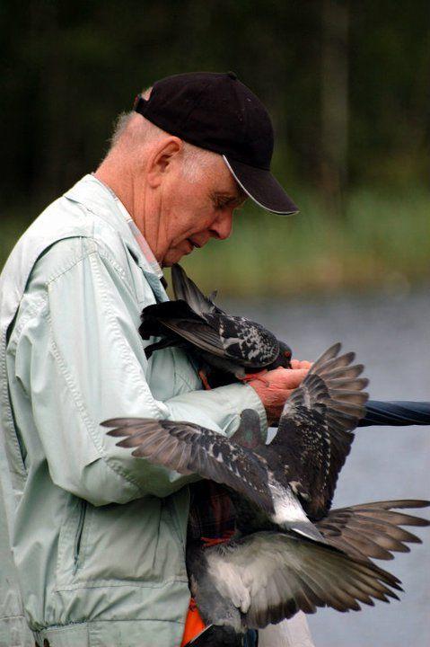 Pak Tua penyayang burung di danau svarttemosse.