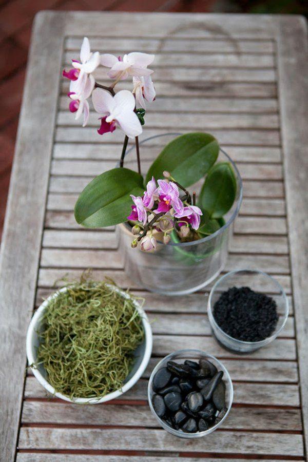 entretien des orchidées: comment en faire une composition florale