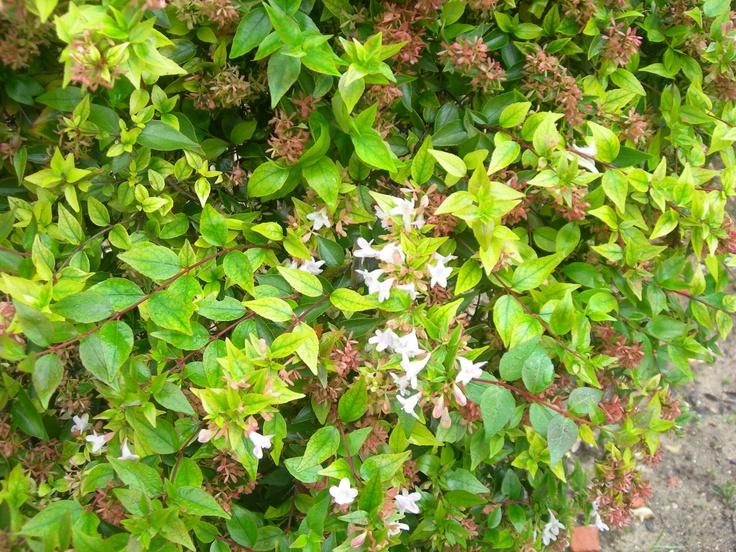 Mesmo no inverno, há arbustos com esta cor!