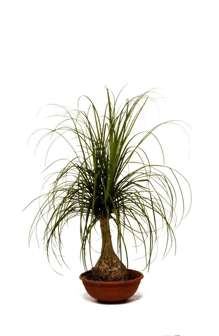 87 best cactus and succulents images on pinterest plants