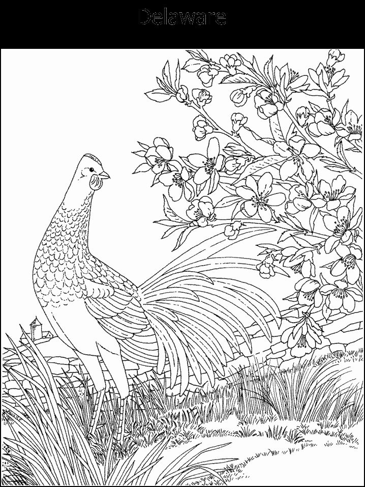 19 best Coloring Pages State Birds Flowers images on Pinterest