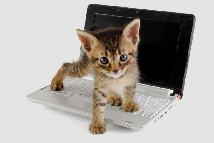 Why is it kittens love to walk across keyboards?