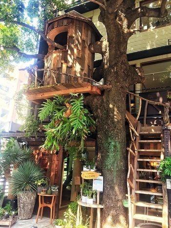 大きい木とツリーハウスが目印のカフェは雰囲気抜群です。