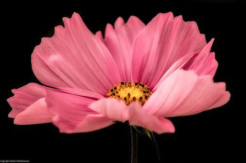 simple elegance by Robert Buchkremer   Google+