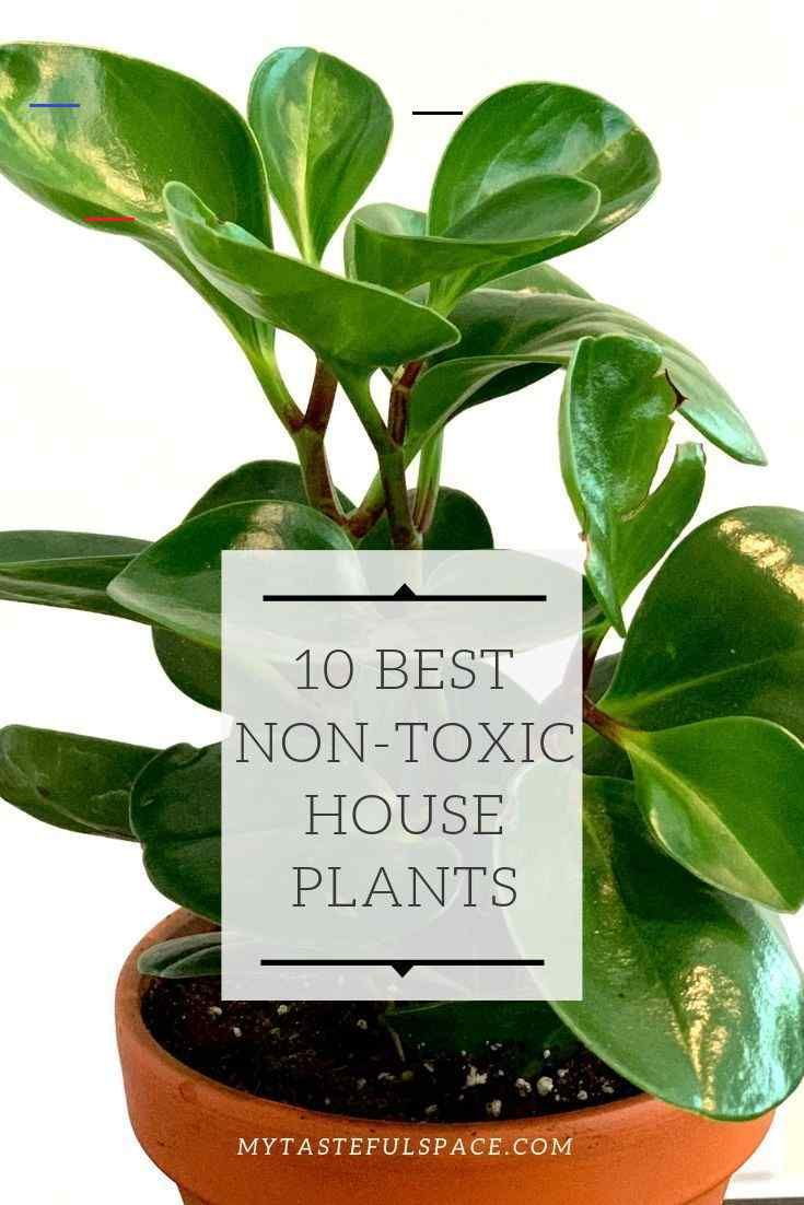 10 Best Non Toxic Houseplants That Are Safe For Children Cats Dogs My Tasteful Space Plantsindoor These No I 2020 Planteideer Potteplante Indendors Planter