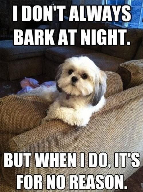 The most interesting dog in the world.