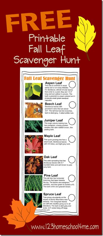 This FREE Fall Leaf Scavenger Hunt From 123 Homeschool for me will help kids learn about the huge variety of leaves around them by helping them
