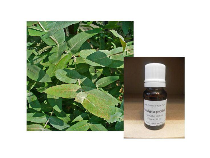EUCALYPTUS GLOBULEUX (Eucalyptus globulus)  Partie distillée: feuilles  Chémotype: oxydes, sesquiterpènes, monoterpènes, sesquiterpénols.  Propriétés: experctorant, anti-infectieux, antiviral, antibactérien, antifongique, infections respiratoires, dermites.  Usage: diffusion, inhalation, onctions sur le thorax, en dilution dans une huile végétale. Contre-indications: asthme, grossesse, allaitement, jeune enfant (préférer l'Eucalyptus radiata), peut parfois provoquer un assèchement des…
