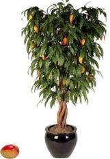 des astuces de jardinage pour faire pousser une mangue