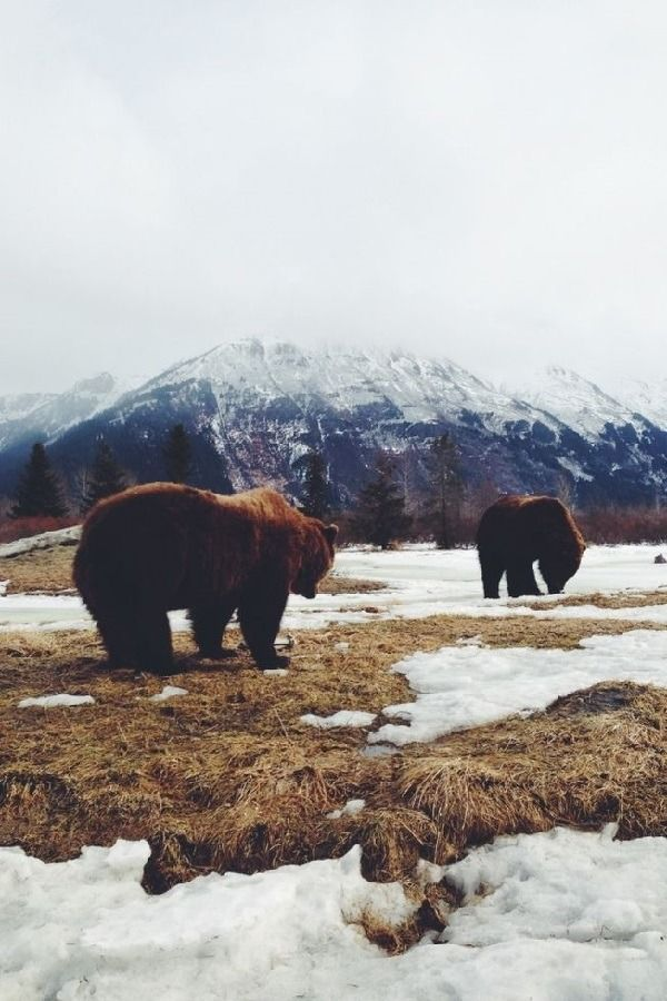 I will. I will go somewhere like this someday. (Except maybe without the brown bears standing right in front of me XD)