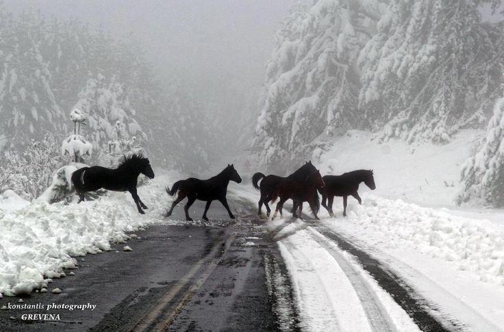 horses in the snow in Grevena - Macedonia - Greece !  #Macedonia #Greece #horses #snow #photography #beautiful