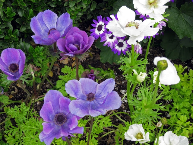 early spring flowers in purple amp white earliest spring