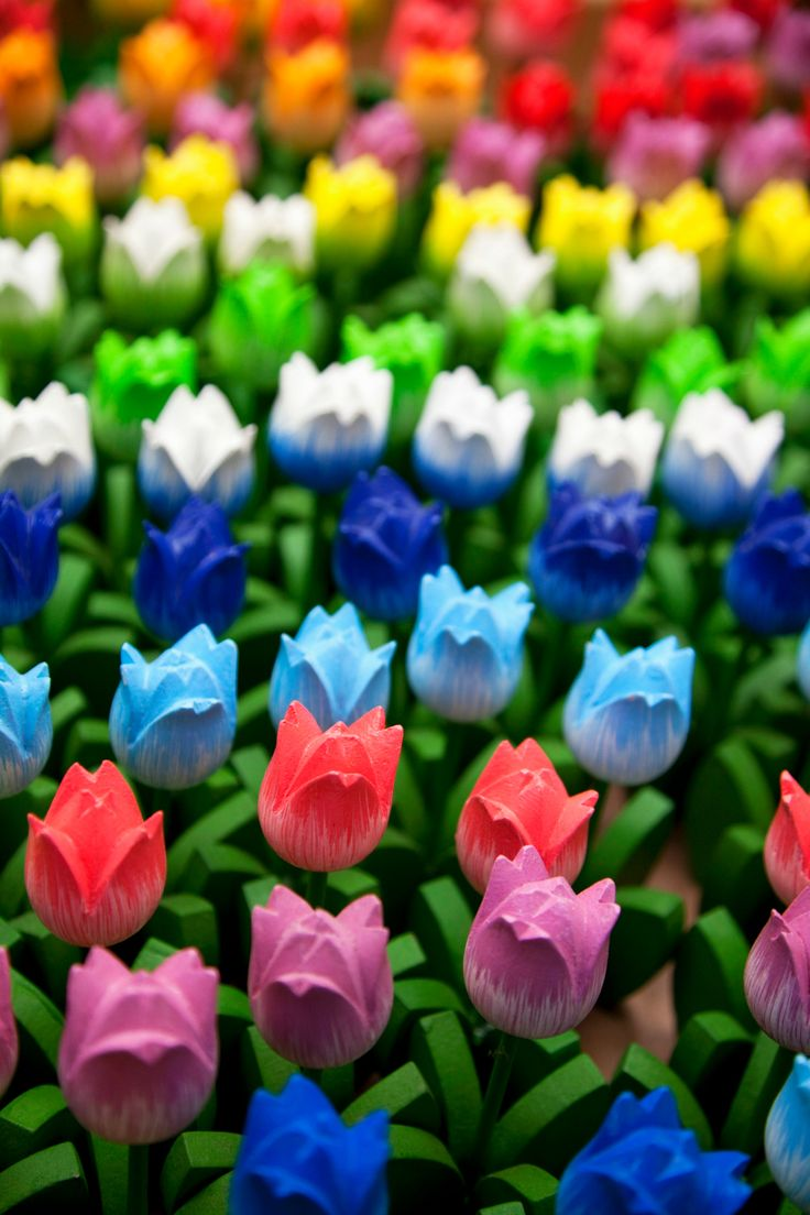 A colourful display of wooden tulips for sale at the Bloemenmarkt © Martin Child/Getty Images
