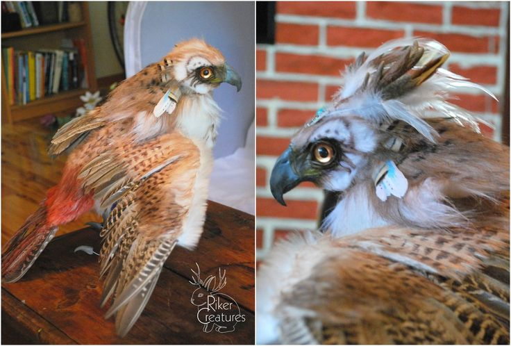 Cernunnos The Fantasy Red Tailed Hawk Wip By