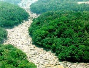 urandir- alerta desmatamento da floresta amazonica no brasil