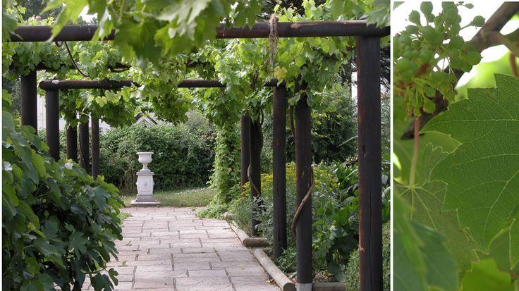 Grape Arbor Entrance