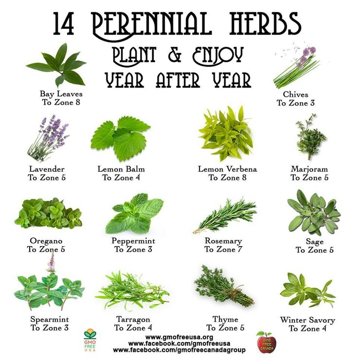 Chart of 14 Perennial Herbs: (Bay Leaves, Chives, Lavender, Lemon Balm, Lemon Verbena, Marjoram, Oregano, Peppermint, Rosemary, Sage, Spearmint, Tarragon, Thyme, Winter Savory)