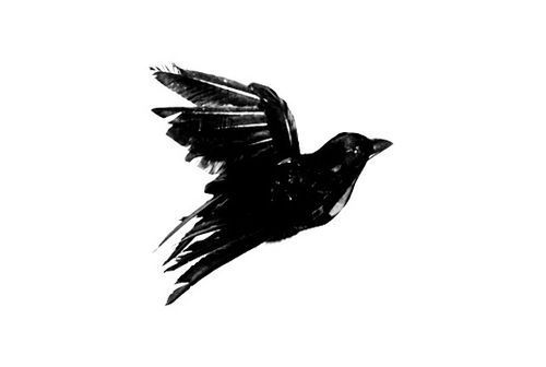 """Tattoo idea. Blackbird outline with lyrics to the Beatles song """"Blackbird"""" filling the outline 