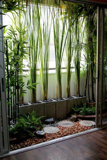 Bamboo in long rectangular pots on the North wooden fence, live screen for picnic area and seating area for koi pond, also on the second floor balcony before amma's bedroom to provide privacy