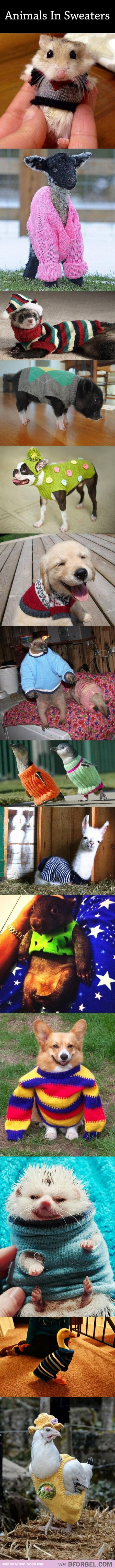 14 Adorable Animals In Sweaters!