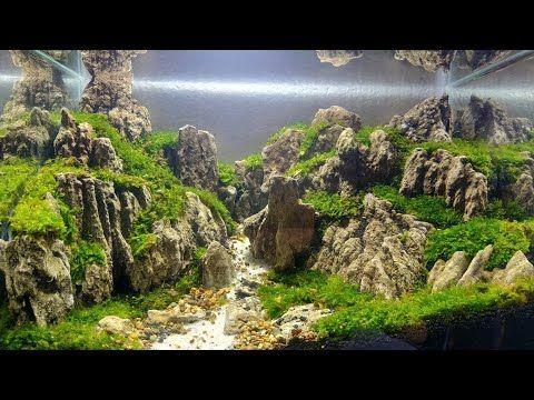 39 Aquascape Batu Pasir Youtube Aquascaping Aquarium Ikan Pohon Bonsai