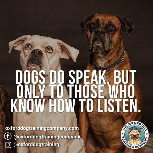 Dogtraining Dogtrainer Dog Dogsofinsta Dogs Dogsofinstagram