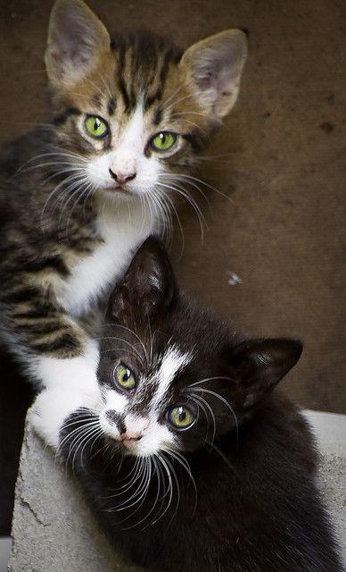 stray kitten portrait | Flickr: Intercambio de fotos