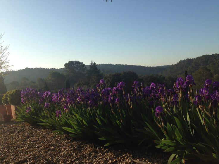 Vue matinale sur la vallée