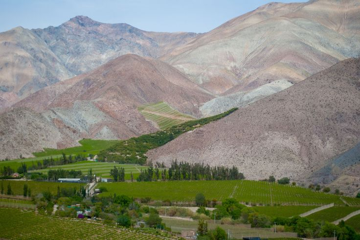 https://flic.kr/p/SsXEfH | Chile 68 | Elqui Valley and pisco vineyards.