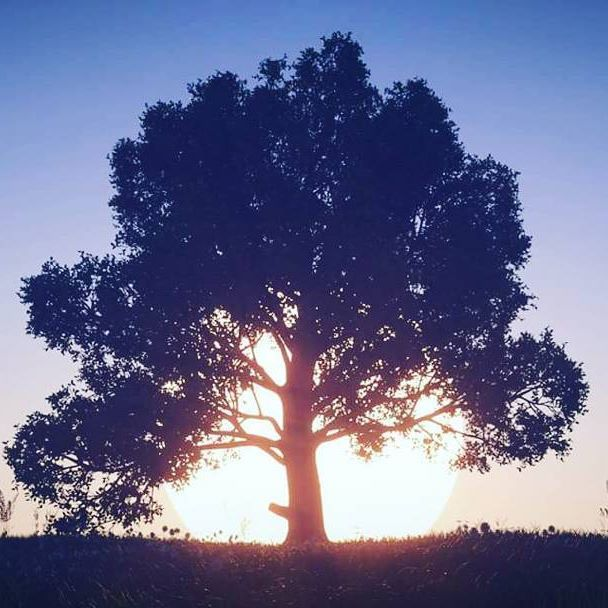 Forester sunset tree 3dquakers.com #forester #cinema4d #trees #landscape