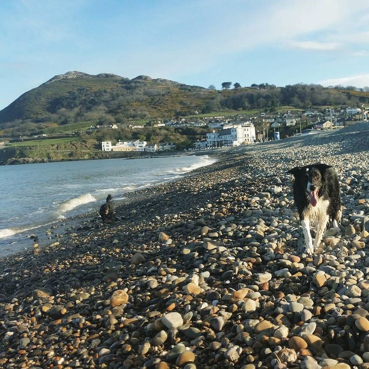 A dogs life on Bray beach #bray #beach #dog