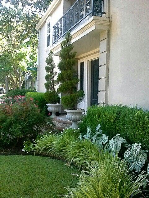 Front yard landscape ... potted swirled juniper, knock out roses, liropie grass, caladiums, boxwood shrubs
