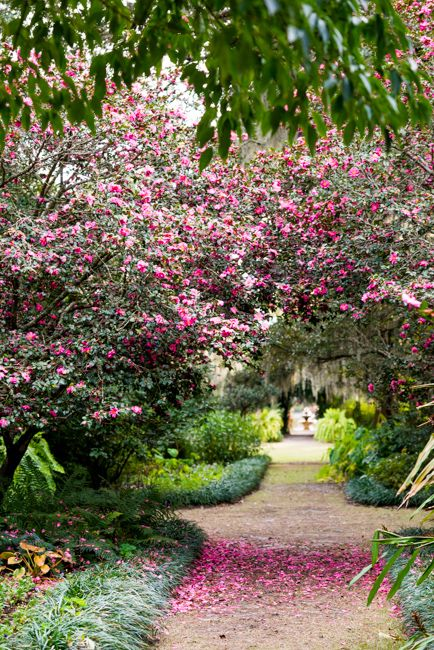 Airlie Gardens in Wilmington, NC