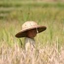 Vietnamese boy in the rice fields.