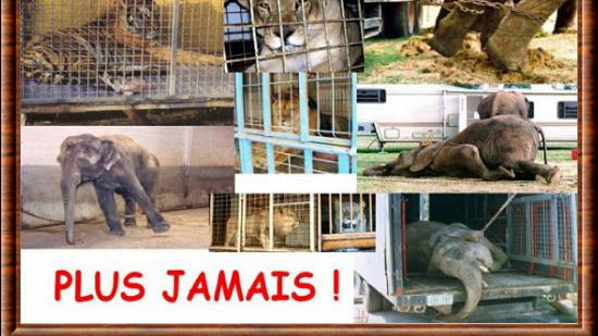 Petitioning MAYOR OF PERPIGNAN, JEAN-MARC PUJOL CIRCUS ANIMALS WITH STOP to…