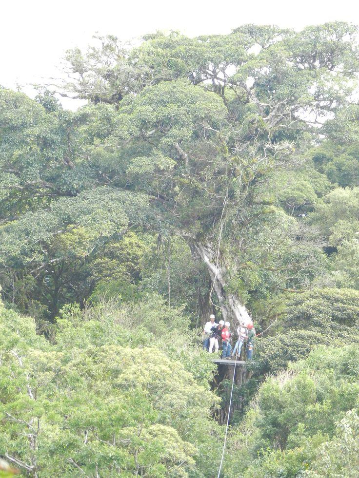Rain Forest - Monte Verde, Costa Rica