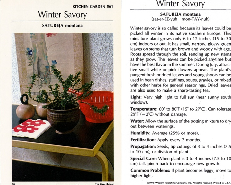 Winter Savory: Essential Oil, Growing Herbal, Herbal Remedies, Medicinal Gardening, Winter Savory, Medicine Gardens, Kitchens Gardens, Growing Info, Savory Growing