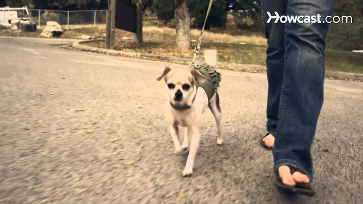 How to Use Dog Whisperer Tips to Calm an Overactive Dog